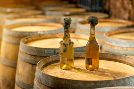 black mold: Old bottles of white wine with famous black mold in a wine cellar in Hungary Stock Photo