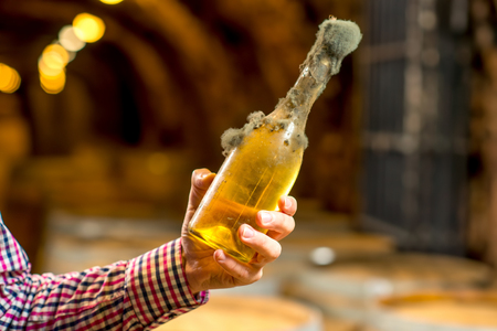 black mold: Holding old bottle of white wine with famous black mold in a wine cellar in Hungary