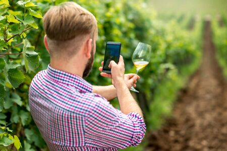 vinery: Wine maker or vinery owner photographing glass of wine on the vineyard. Promoting wine in social networks Stock Photo