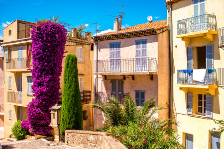 big flower: Beautiful residential buildings with colonial architecture with big flower bush in Cannes city in French riviera.