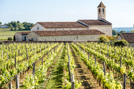 Saint Emilion vineyards in France