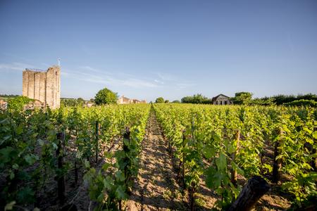 Saint Emilion vineyards in France