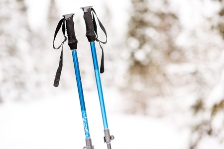 Tracking sticks on the snowy fir forest background. Winter hiking concept