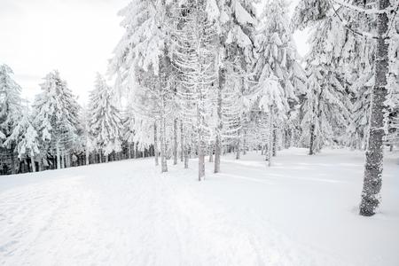눈 덮힌 전나무 숲에 아름 다운 풍경보기