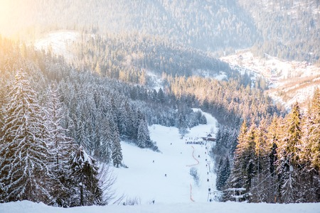 Landscape view on the beautiful Carpathian mountains with ski slope and fir forest during the sunny weather