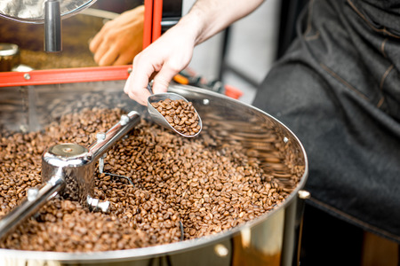 Getting with scoop roasted coffee beans from the roaster machine to check the quality Foto de archivo