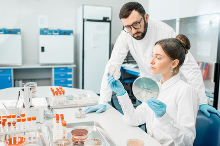 Couple of medics in uniform looking on the effect of antibiotics on bacteria in Petri dishes making bacteriological tests in the modern laboratory Stock Photo