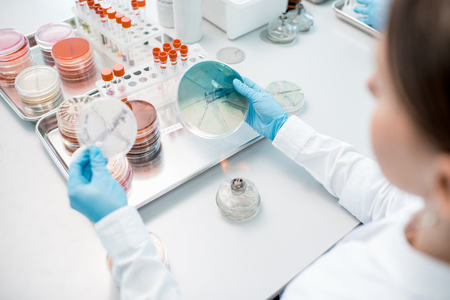Woman making bacteriological seeding in Petri dishes heeting tool with fire in the laboratory Stock Photo