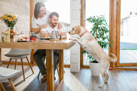 Young couple having a breafast with their dog jumping on the table in the country house Banco de Imagens