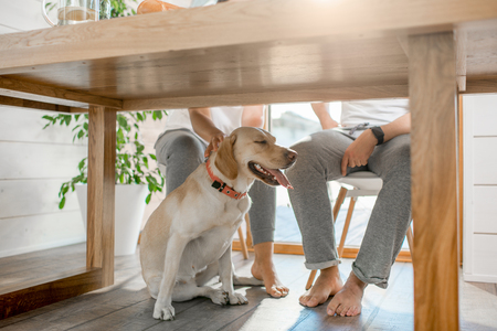 Happy dog sitting under the table with legs of the couple at home Banco de Imagens - 105234049