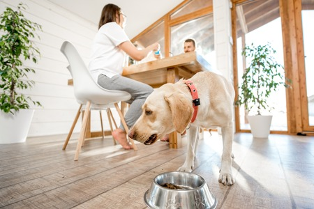 Dog eating from the bowl in the dining room with young couple on the background in the country wooden house