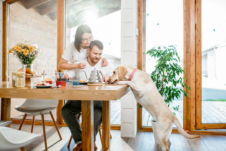 Young couple having a breafast with their dog jumping on the table in the country house Stock Photo