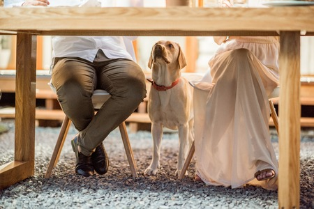 Hungry dog waiting for food under the table outdoors Stok Fotoğraf - 105233866