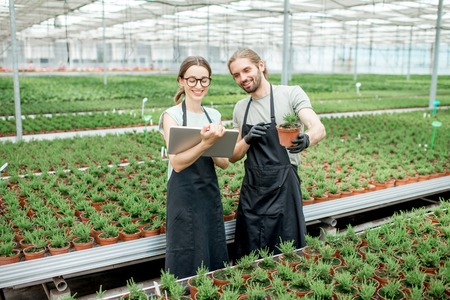 Couple of workers working with digital tablet supervising the growing of plants in the greenhouse of the plants production Stock Photo