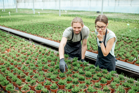 Young couple of workers taking care of plants supervising the growing process in the greenhouse