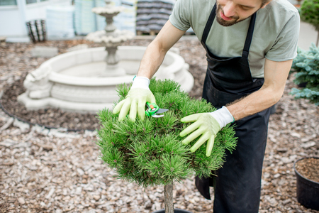 Handsome gardener in working uniform taking care of ornamental bush cutting leaves in the garden Stock Photo - 104849770