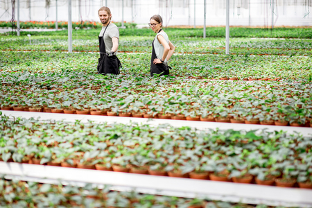 Couple of workers of plant production walking supervising the growing process in the greenhouse