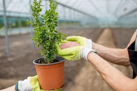 Agricultor sosteniendo fertilizantes minerales con planta verde de pie en el invernadero