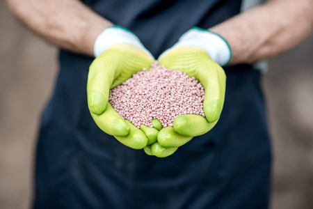 Farmers hands in the green working gloves holding mineral fertilizers, close-up view Stock Photo