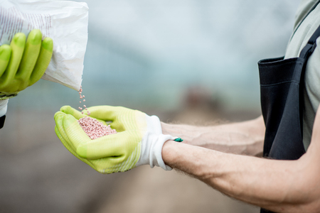 Pouring mineral fertilizers into the farmers hands in the glasshouse, close-up view