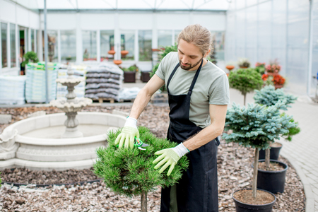 Handsome gardener in working uniform taking care of ornamental bush cutting leaves in the garden Stock Photo - 104866982
