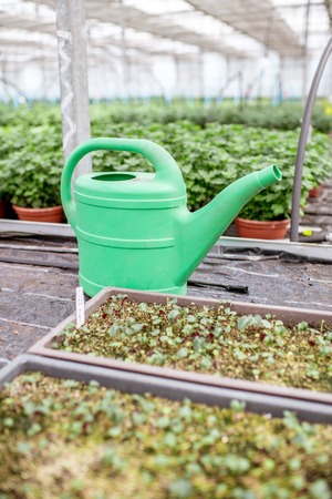 Watering can with green plants in the greenhouse of the plant production farm