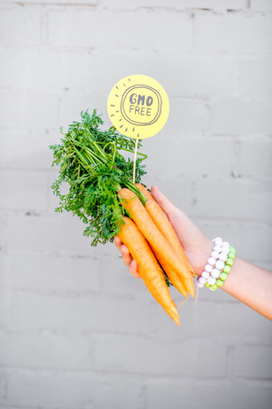 Holding bunch of carrot with green sticker on the gray wall background Stok Fotoğraf - 104991319