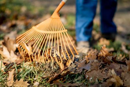 Mężczyzna zamiata liście z pomarańczowymi grabiami na trawniku, zbliżenie bez twarzy