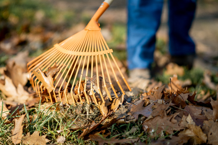 Man sweeping leaves with orange rake on the lawn, close-up view with no face Standard-Bild - 112372664