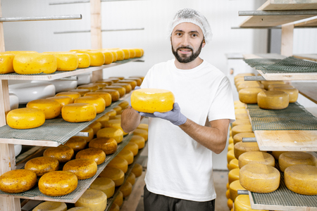 Man checking the quality of the fresh cheese wheels after the waxing and salting process at the storage