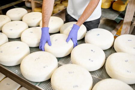 Worker in protective gloves taking fresh salted cheese wheel ready for aging process at the manufacturing. Close-up view Stock Photo