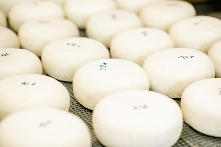 Fresh cheese wheels after the salting process on the table ready for aging