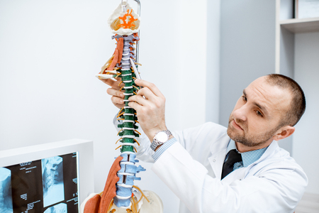 Senior therapist showing on the anatomical model of the human spine during the consultation in the office
