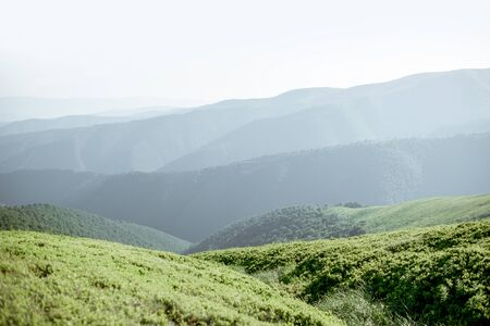Landscape view on the green mountains covered with bilberry leaves in the Carpathians 写真素材