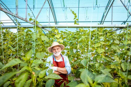 Portrait of a well-dressed senior man standing in a well-equipped hothouse with cucumbers on a small agricultural farm. Concept of a small agribusiness and work at retirement age