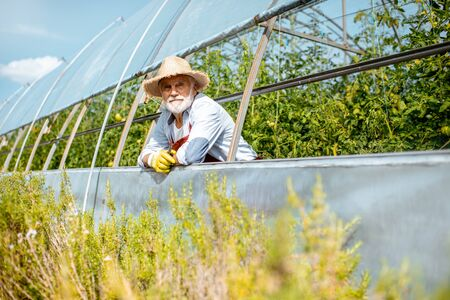 Portrait of a well-dressed agronomist looking out the greenhouse of a small agricultural farm. Concept of a small agribusiness and work at retirement age