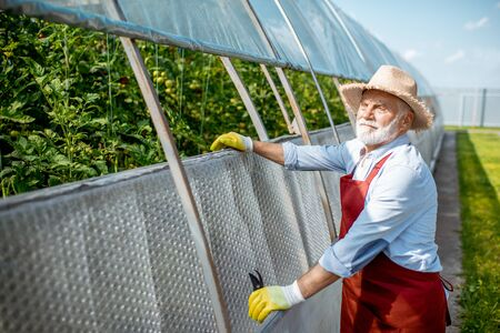Portrait of a cheerful senior man standing near the greenhouse with tomato plantation on the agricultural farm. Concept of a small agribusiness and work at retirement age