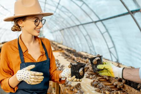 Woman farmer taking care of snails, examining growing process in the hothouse of the farm. Concept of farming snails for eating 版權商用圖片