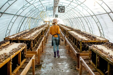 Farmer walking in the hothouse of a farm for snails growing, rear view. Concept of farming snails for eating