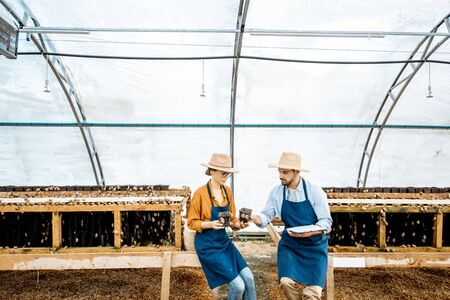 Two farmers examining snails growing process in the hothouse of the farm, wide angle view. Concept of farming snails for eating