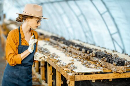 Woman farmer taking care of snails, examining growing process in the hothouse of the farm. Concept of farming snails for eating 写真素材