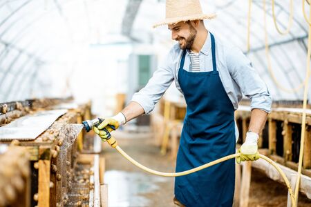 Handsome worker washing shelves with water gun, taking care of the snails in the hothouse of the farm. Concept of farming snails for eating Stock fotó - 127936196