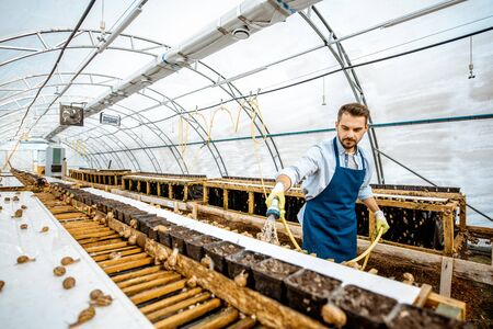 Handsome worker washing shelves with water gun, taking care of the snails in the hothouse of the farm, wide angle view with copy space Stock fotó - 127936197