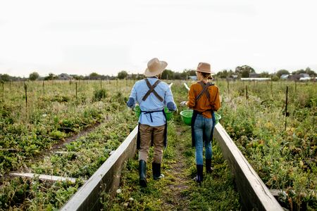 Two farmers or agronomists walking on the farmland for growing snails, rear wide angle view. Concept of agribusiness and farming Banque d'images - 127936230