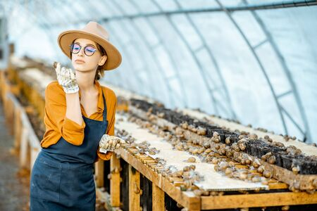 Woman farmer taking care of snails, examining growing process in the hothouse of the farm. Concept of farming snails for eating Stock fotó