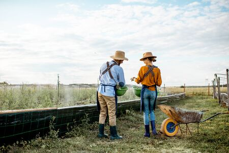Two well-dressed farmers or agronomists walking on the farmland for growing snails, rear wide angle view. Concept of agribusiness and farming Banque d'images - 127936263