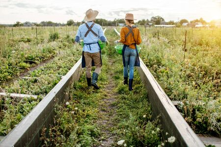 Two farmers or agronomists walking on the farmland for growing snails, rear wide angle view. Concept of agribusiness and farming Banque d'images - 127936278