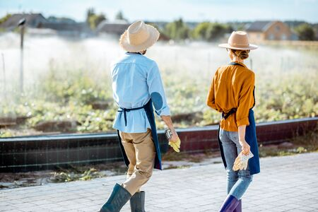 Two young farmers walking on the farmland for snails growing with automatic watering during the sunset, rear view Banque d'images