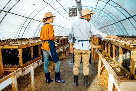 Two farmers examining snails growing process in the hothouse of the farm, rear view. Concept of farming snails for eating