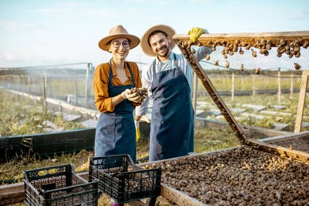 Portrait of a two well-dressed farmers taking fresh snails from the nets for sell on a farm outdoors. Concept of farming snails for eating